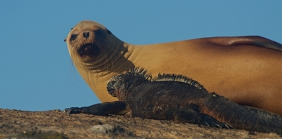 Sea-Lion-&-Marine-Iguana-Isabela-Tour